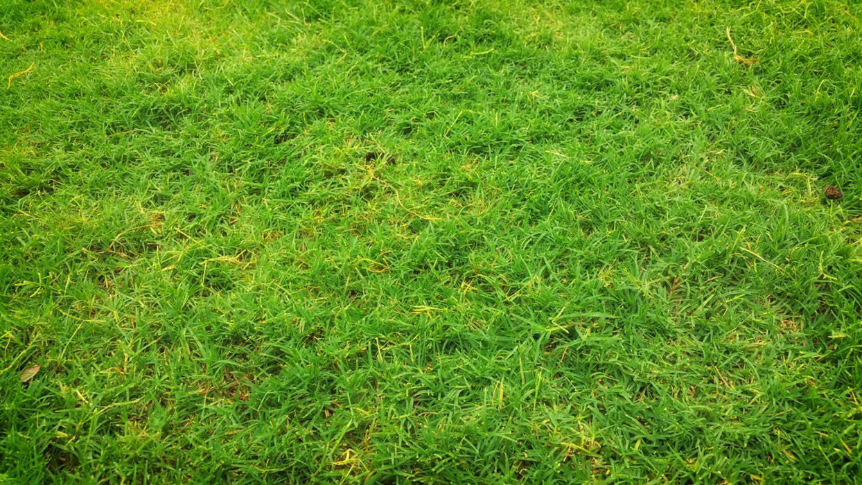 Sydney synthetic grass