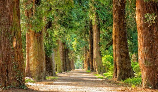 Choosing The Best Arborist Sydney Has To Offer